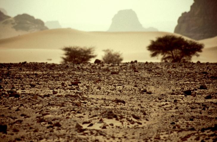 Algeria - Sahara 066