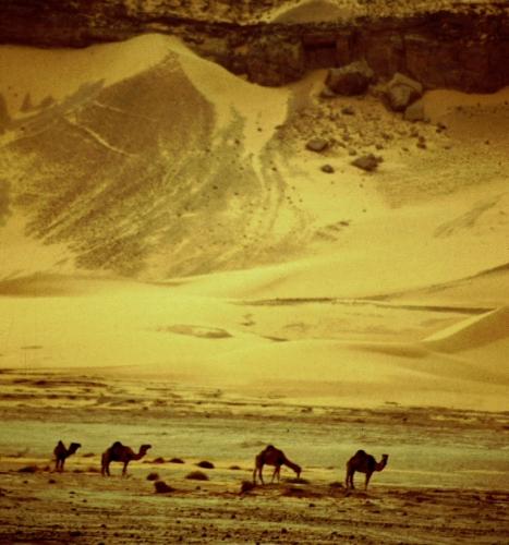 Algeria - Sahara 068