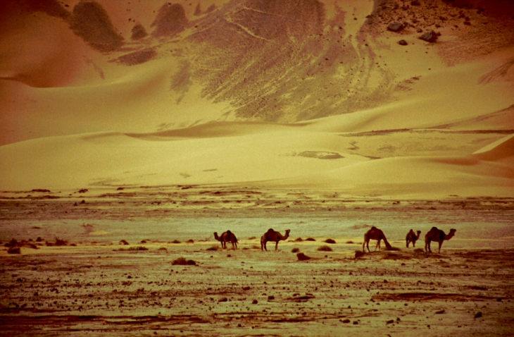 Algeria - Sahara 069