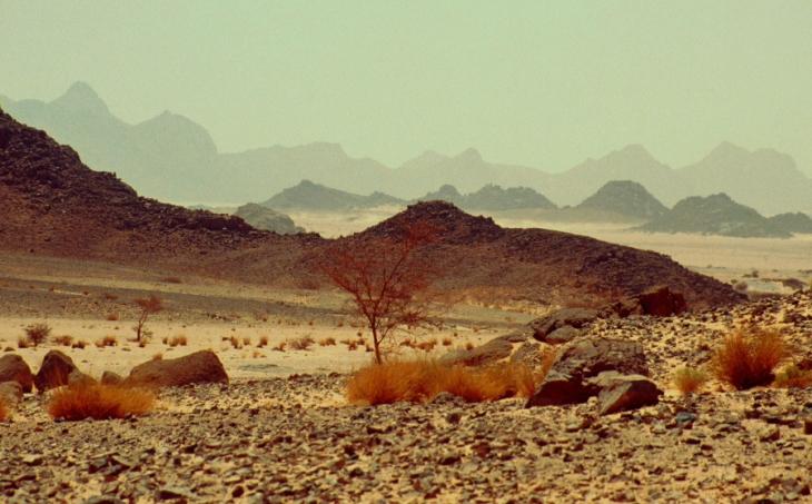 Algeria - Sahara 163