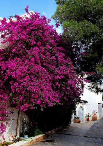 Greece - Agkistri 60