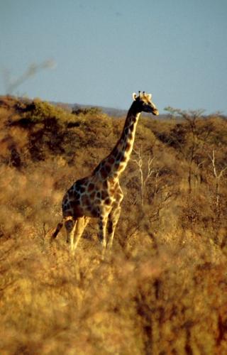 Namibia - Waterberg 14