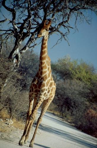 Namibia - Etosha 04