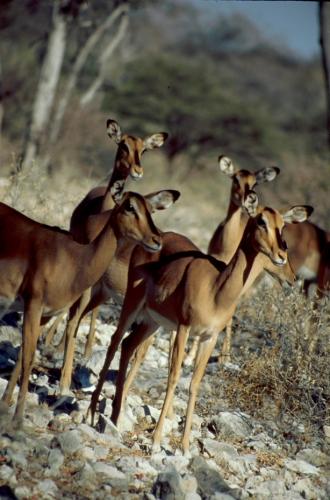 Namibia - Etosha 05