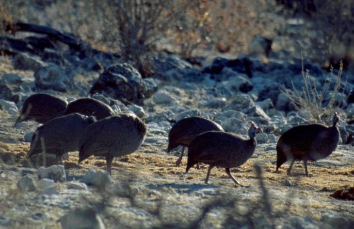 Namibia - Etosha 06