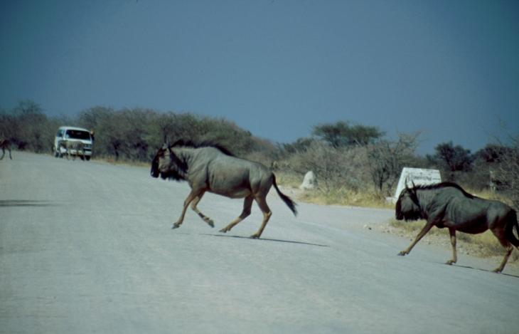 Namibia - Etosha 07