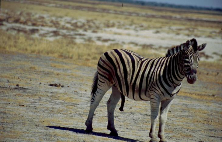 Namibia - Etosha 09