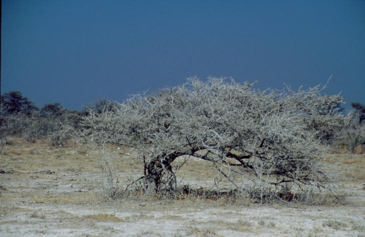 Namibia - Etosha 10