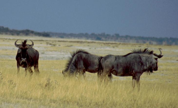 Namibia - Etosha 12