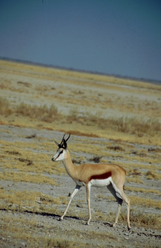 Namibia - Etosha 13