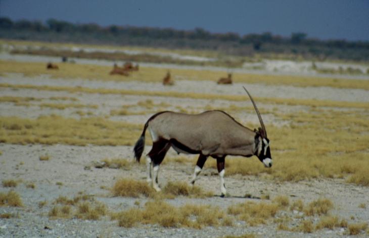 Namibia - Etosha 14