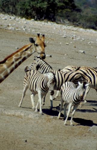 Namibia - Etosha 16