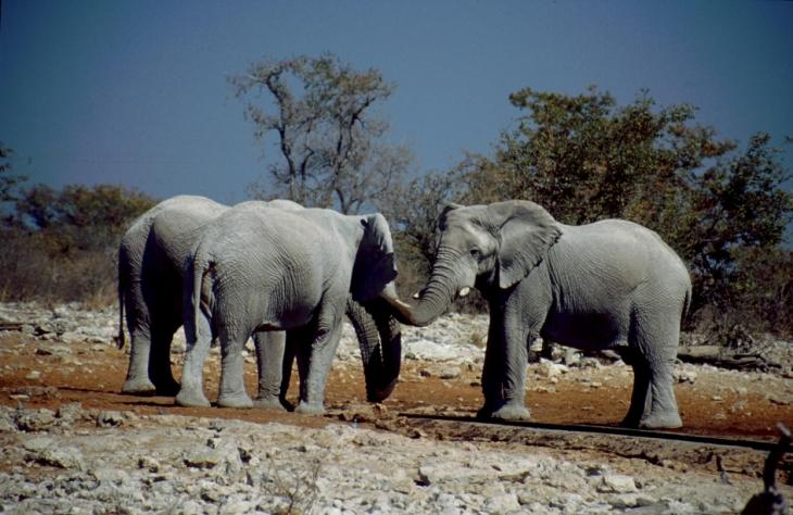 Namibia - Etosha 18
