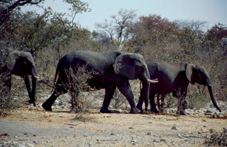 Namibia - Etosha 19
