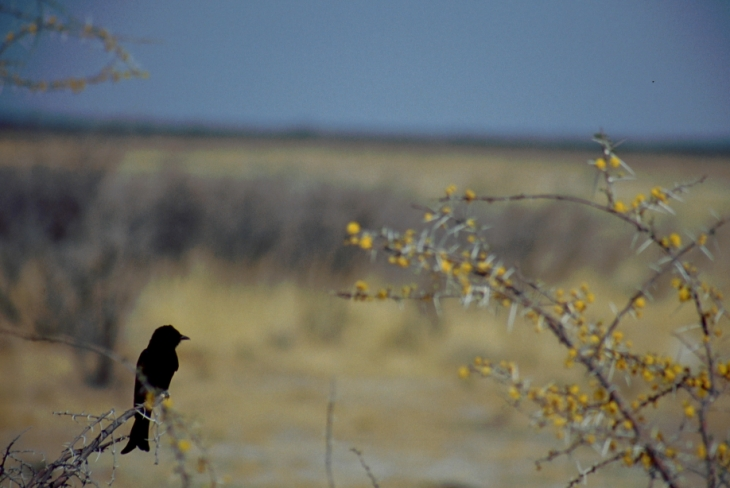 Namibia - Etosha 20