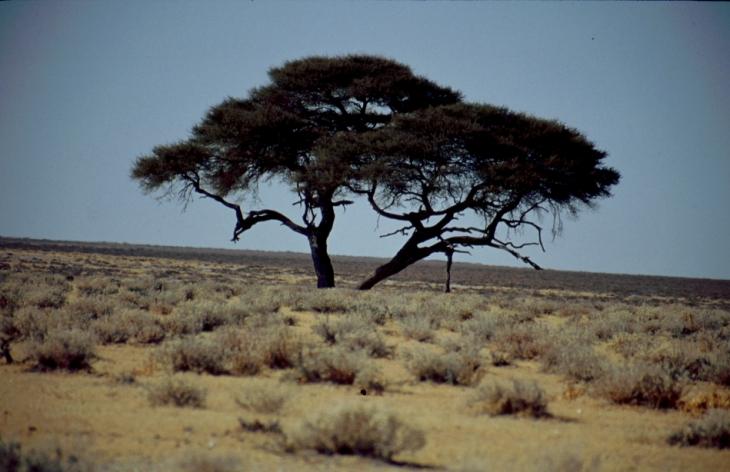 Namibia - Etosha 21