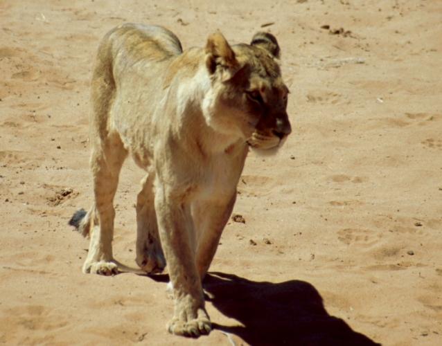 Namibia - Etosha 24