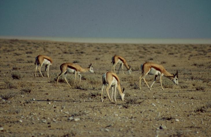 Namibia - Etosha 25