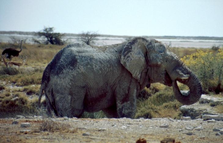 Namibia - Etosha 27
