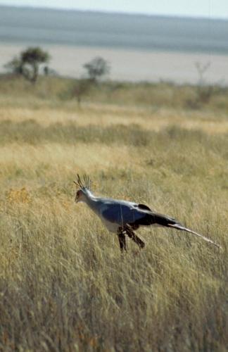 Namibia - Etosha 31