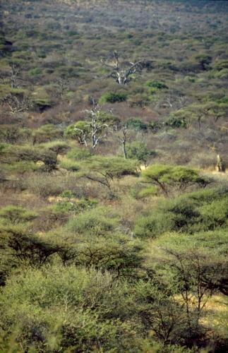 Namibia - Waterberg 09