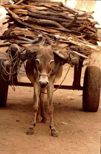 Mali - Bamako 20