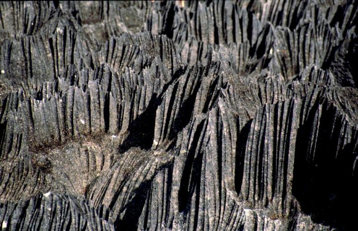 Madagascar - Tsingy of Bemaraha 07