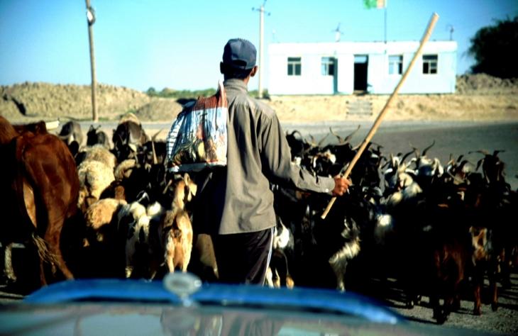 Turkmenistan - Karakum 092 - Towards Gonur Depe