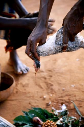 West Africa - Vodou 034